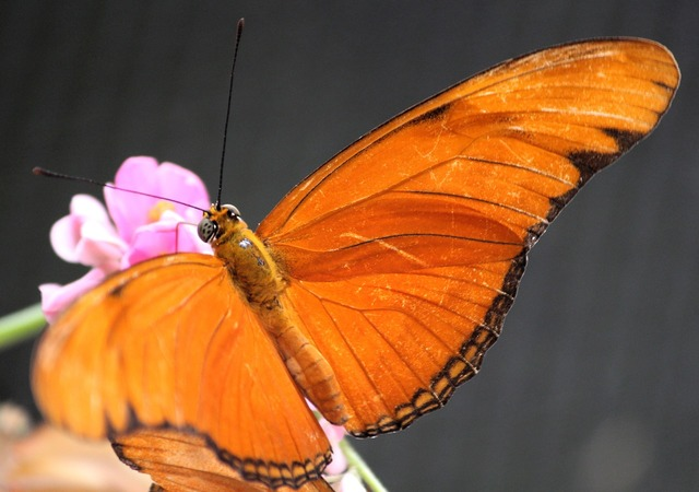 Butterfly blossom bloom, animals.