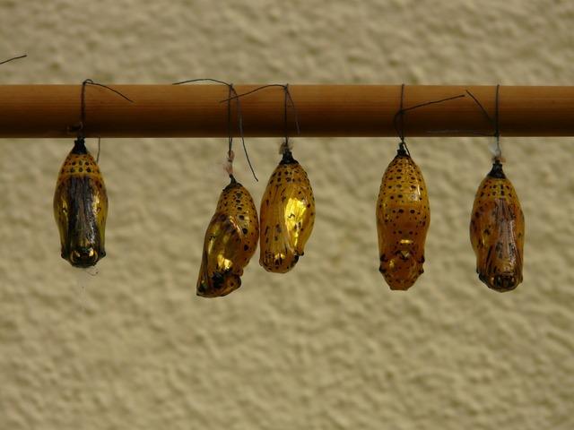 Butterfly dolls dolls butterflies.