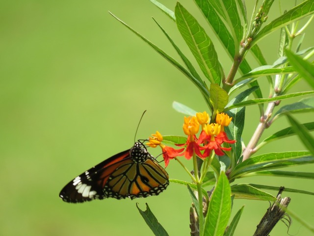 Butterfly flower nature, nature landscapes.
