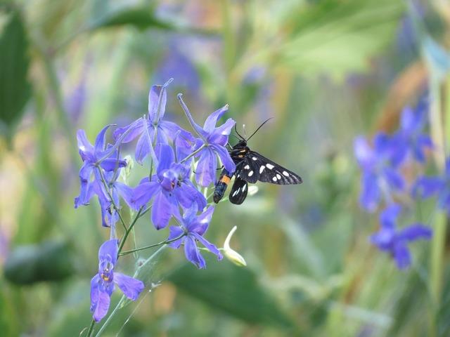 Butterfly flower summer, animals.