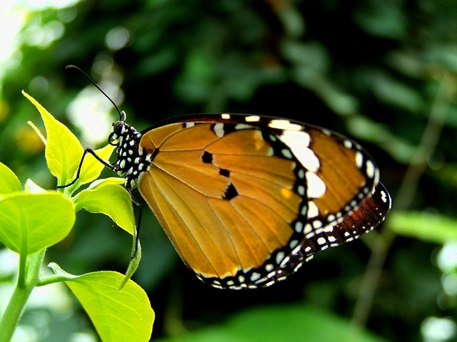 Butterfly green summer day, nature landscapes.