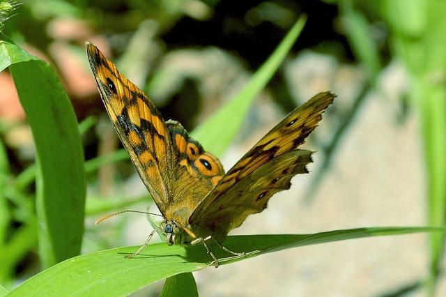 Butterfly macro garden.