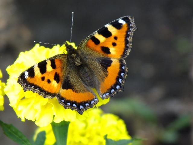 Butterfly summer closeup.