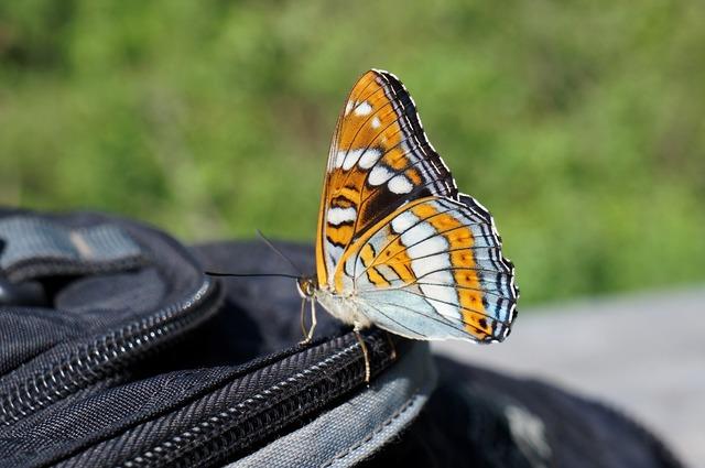 Butterfly summer namekomye, nature landscapes.