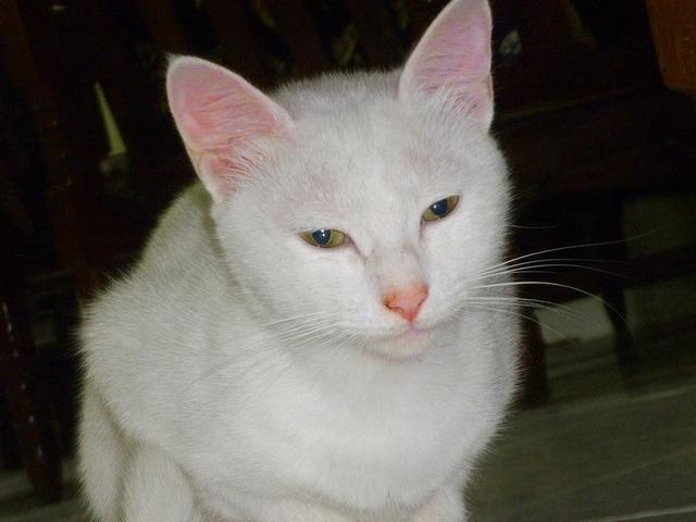 Ca cute cat cat's eyes, animals.