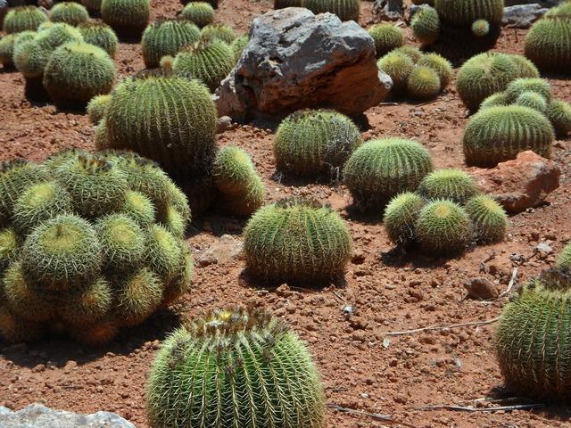 Cactus ball cactus plant, nature landscapes.