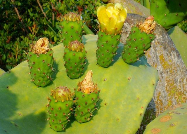 Cactus blossom bloom, nature landscapes.