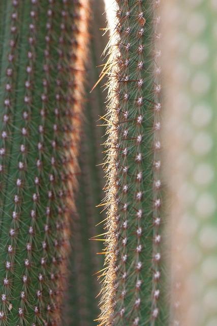 Cactus cactaceae prickly, nature landscapes.