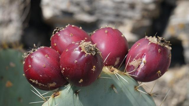 Cactus fruits fruit, food drink.