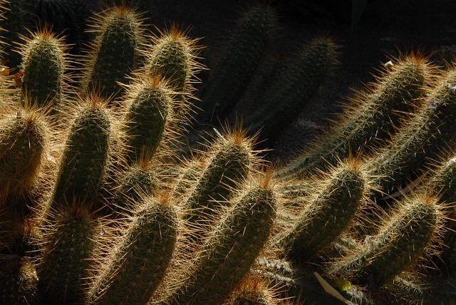 Cactus morocco garden.
