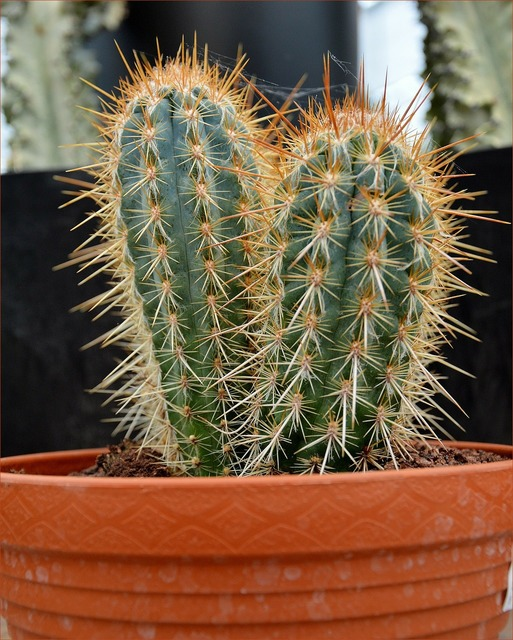 Cactus plant prickly, nature landscapes.
