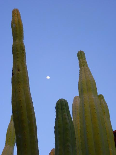 Cactus plant spur, nature landscapes.