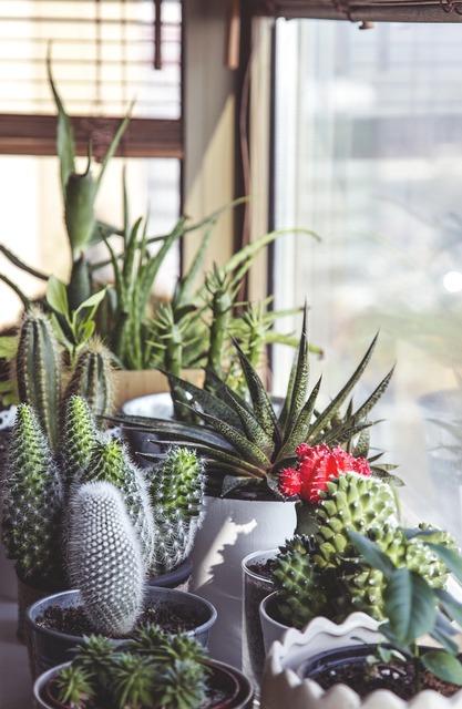 Cactus potted pot, architecture buildings.