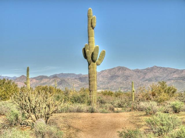Cactus saguaro desert.