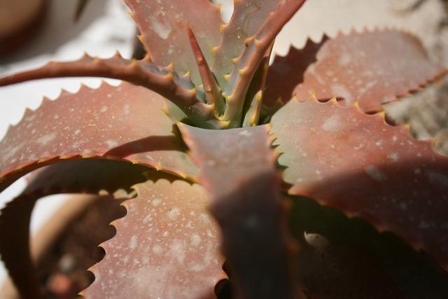 Cactus solar brown, nature landscapes.