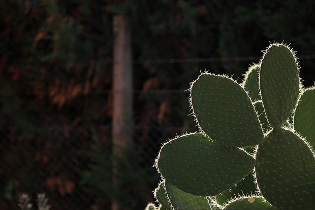 Cactus thorns desert, nature landscapes.