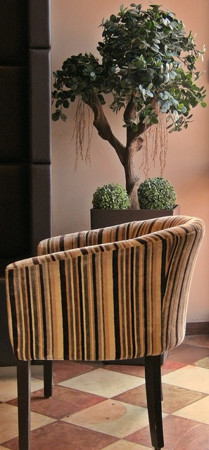 Cafe chair plant, nature landscapes.