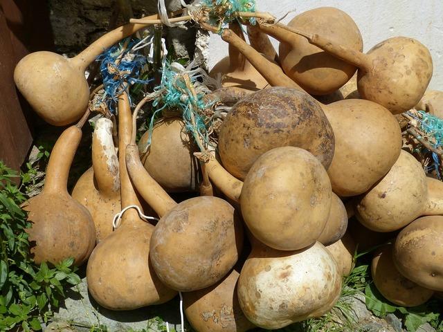 Calabash pumpkin art cucurbitaceae, food drink.