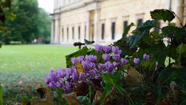 Cambridge university flowers.