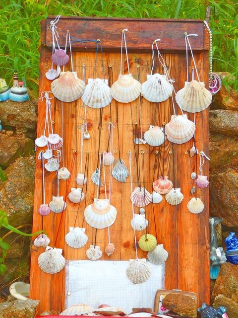 Camino santiago vieira shells.