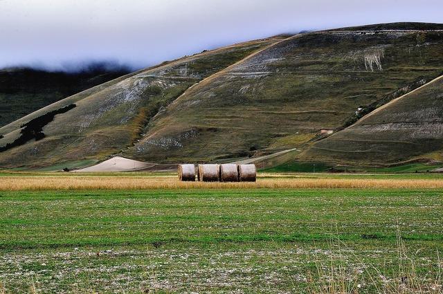 Campaign hills hay bales.