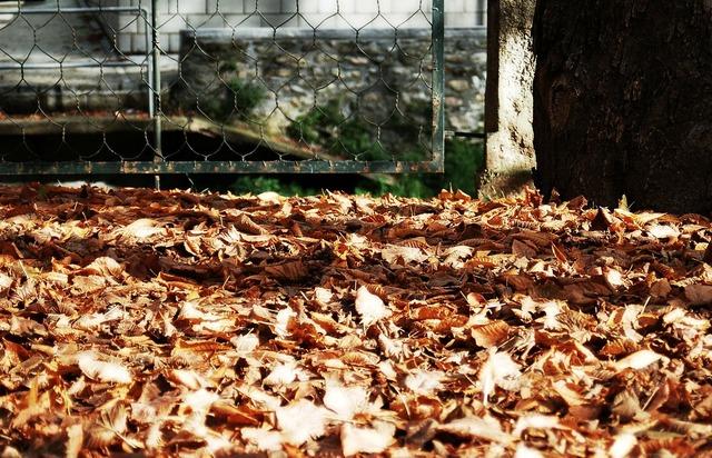 Camprodom girona autumn, nature landscapes.