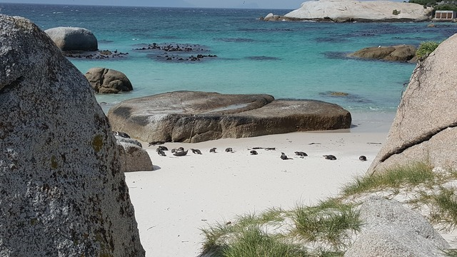 Cape town boulders beach africa, travel vacation.