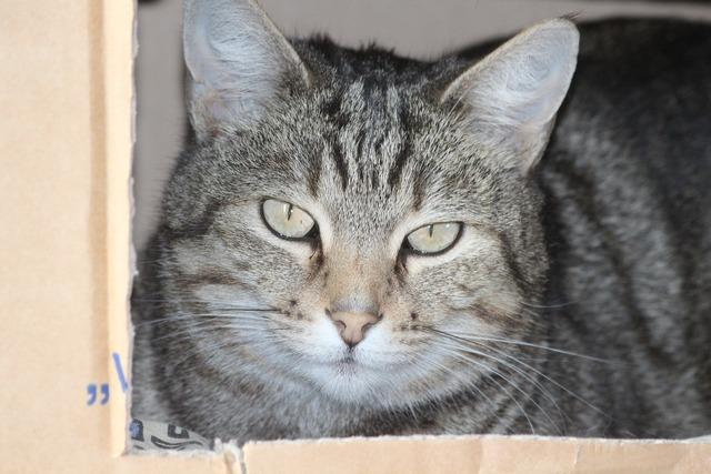 Cardboard cat cat face, animals.