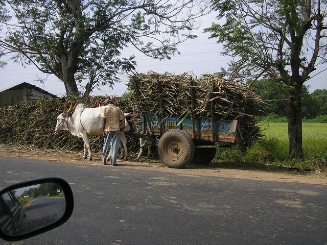 Cart bullock ox cart, transportation traffic.