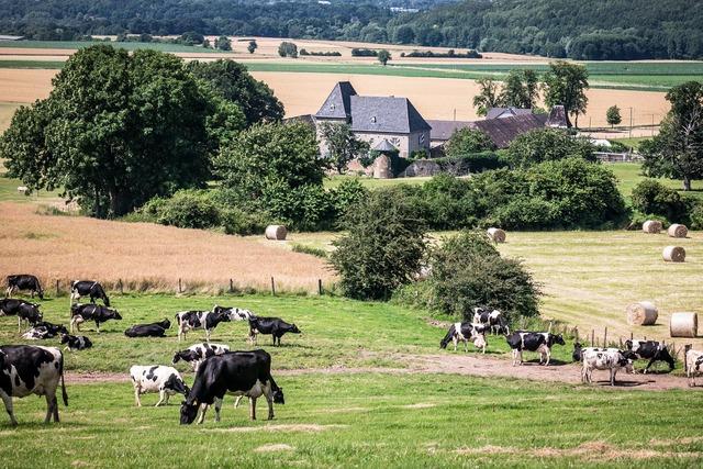 Castle reiterhof fields.