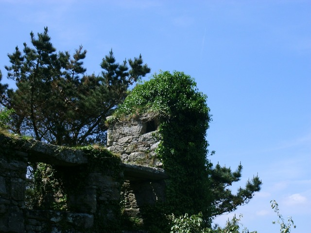 Castle wall overgrown ruin.