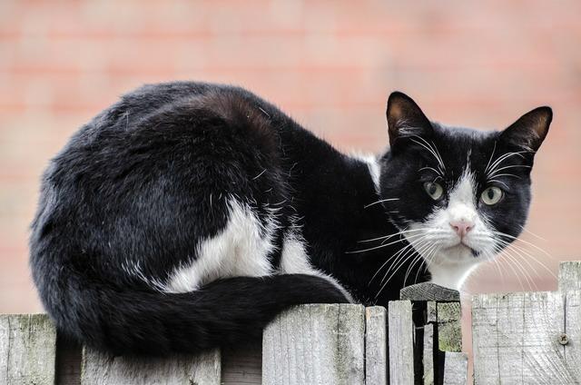 Cat acrobatic garden, animals.