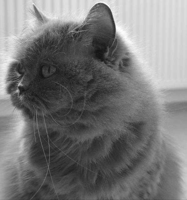 Cat adidas british, animals.