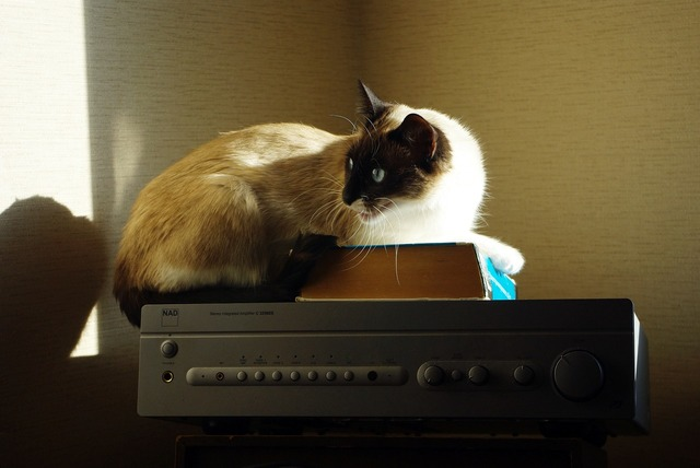 Cat amplifier book, animals.