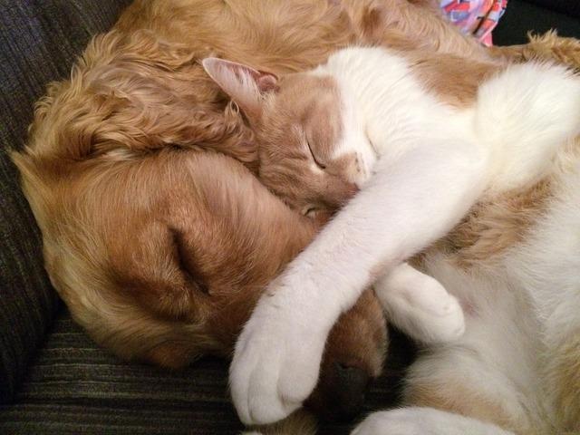 Cat and dog friends cat, animals.