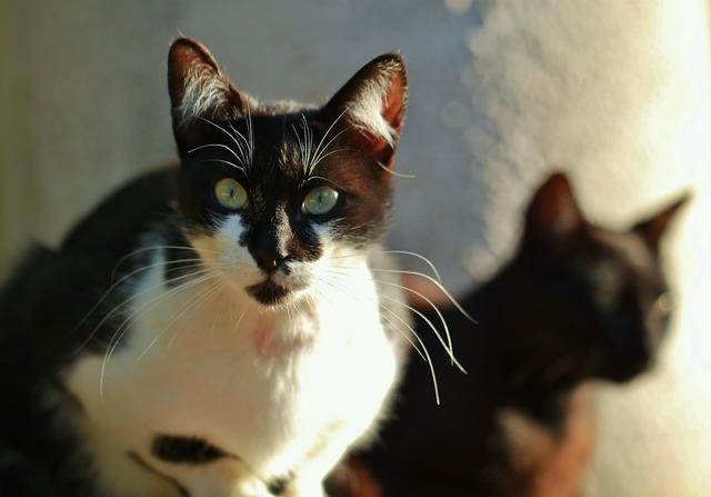 Cat animal cat face, animals.