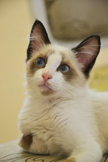 Cat animal feline, animals.