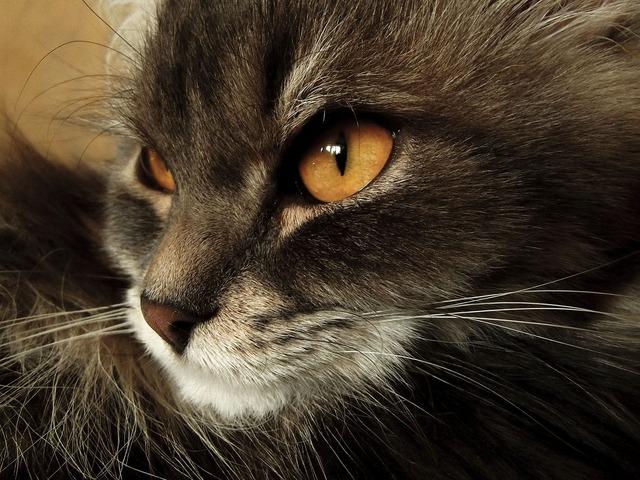 Cat animal home, animals.