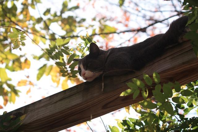 Cat arboreal adorable, animals.