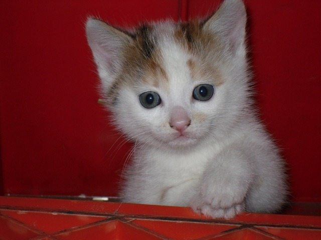 Cat baby cat young animal, animals.
