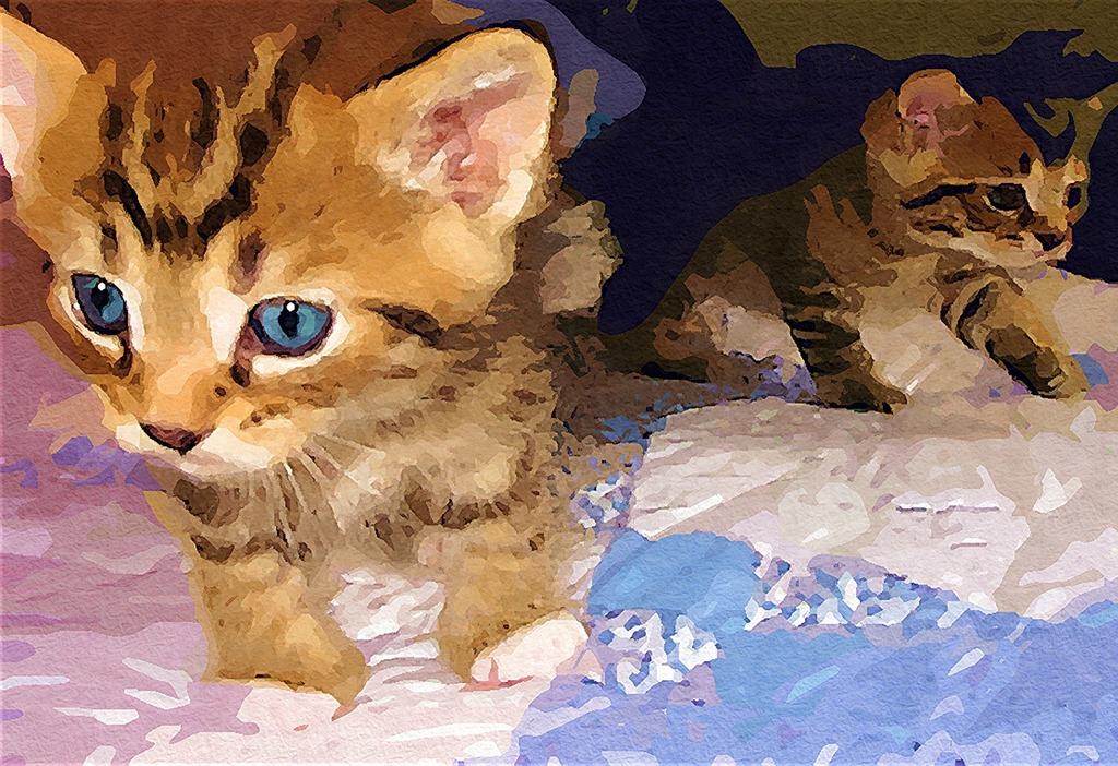 Cat baby face, animals.