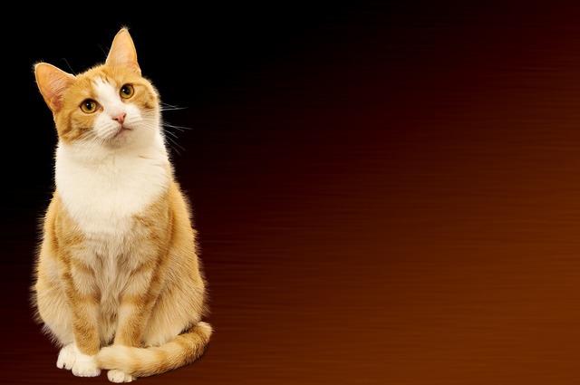 Cat background image festive, animals.