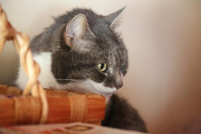 Cat basket look, animals.