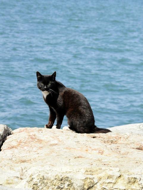 Cat beach black cat, animals.