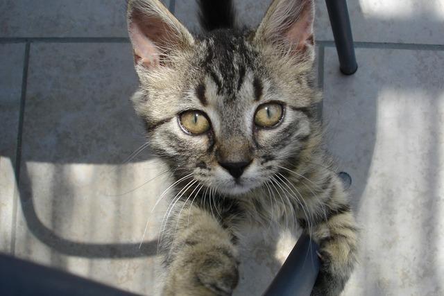 Cat begging wild, animals.