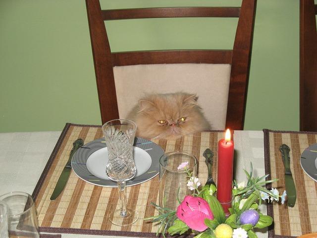 Cat birthday candle, animals.
