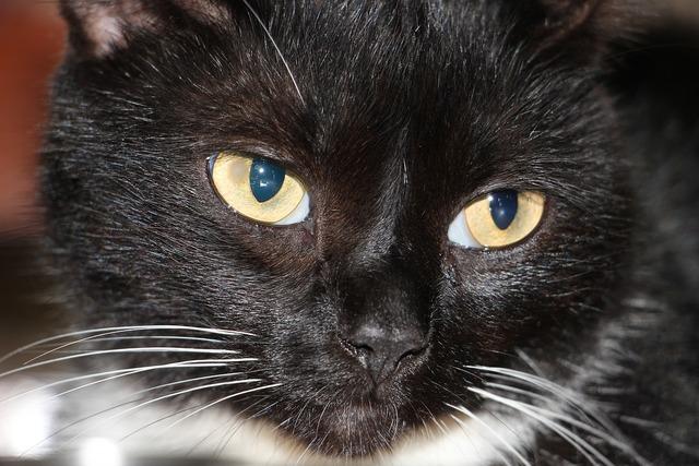 Cat black whisker, animals.