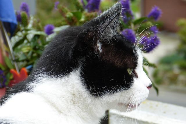 Cat black white, animals.