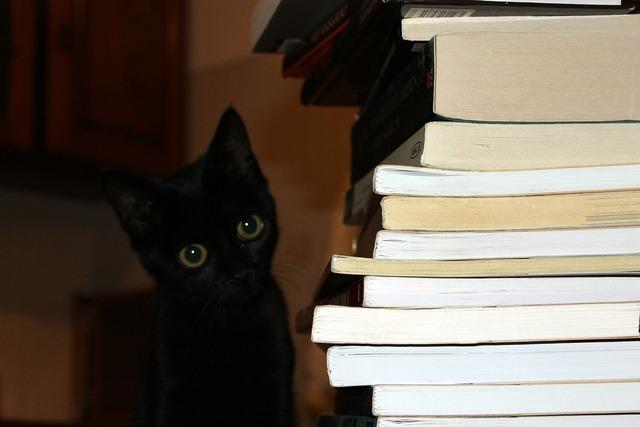 Cat books black, animals.
