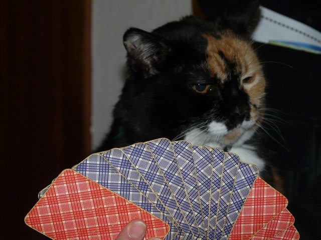 Cat cards play, animals.